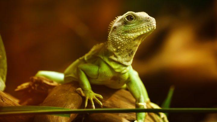 Welches Frostfutter für Reptilien