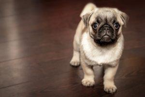 Die besten Probiotika für Hunde
