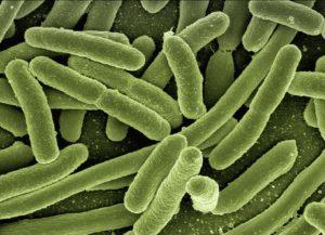 4 Anzeichen dafür, dass Sie mit einem Parasiten infiziert sind